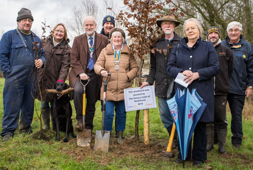 Tree Planting by Rotarians in Maidstone